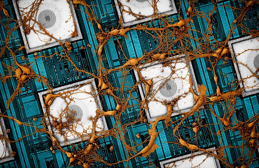 삼성전자, 뇌를 닮은 차세대 뉴로모픽 반도체 비전 제시